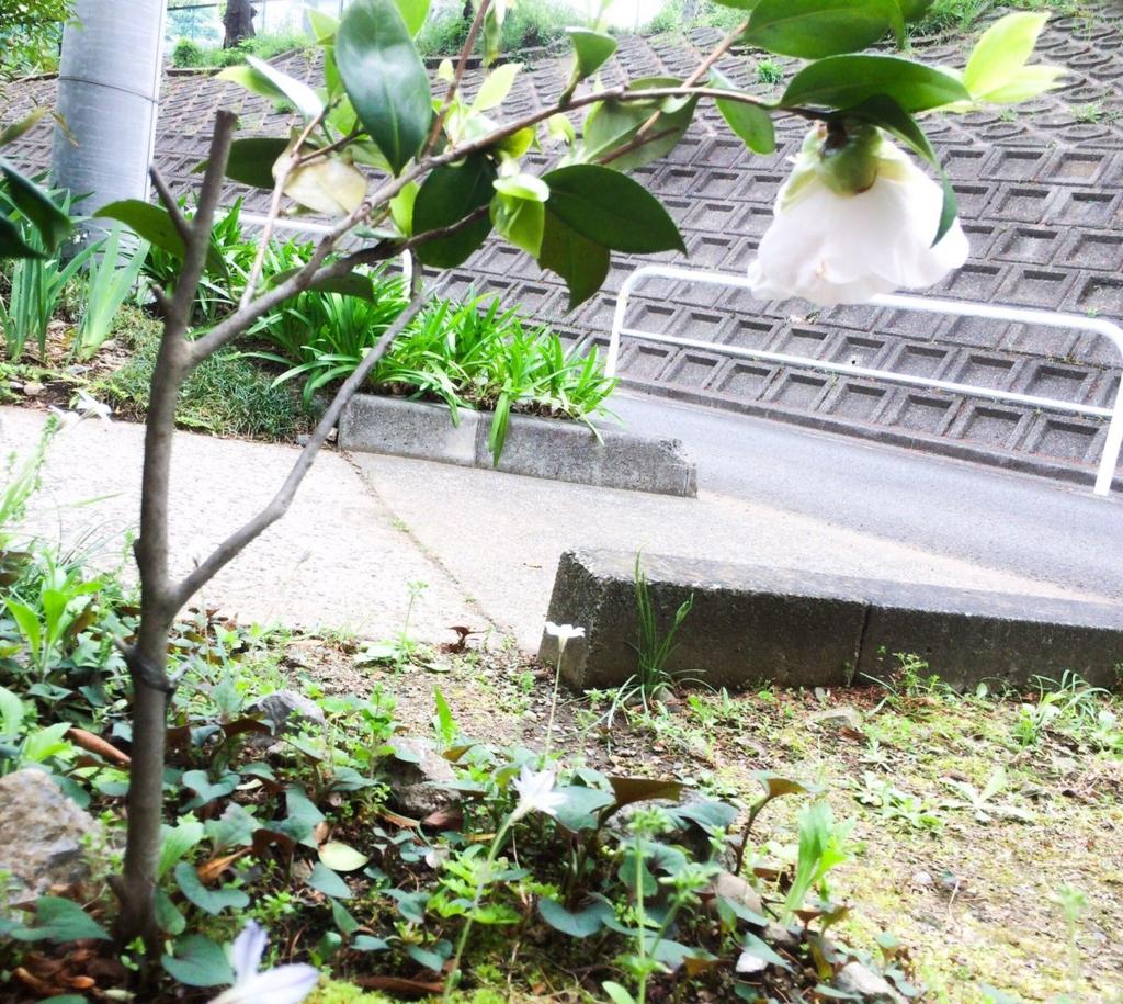 f:id:makuragirui:20170502004310j:plain