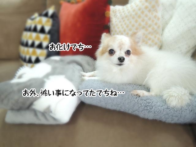 f:id:mama-mamico:20161223124823j:plain