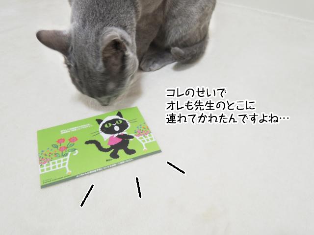 f:id:mama-mamico:20170404145757j:plain