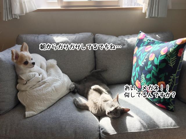 f:id:mama-mamico:20170916155916j:plain