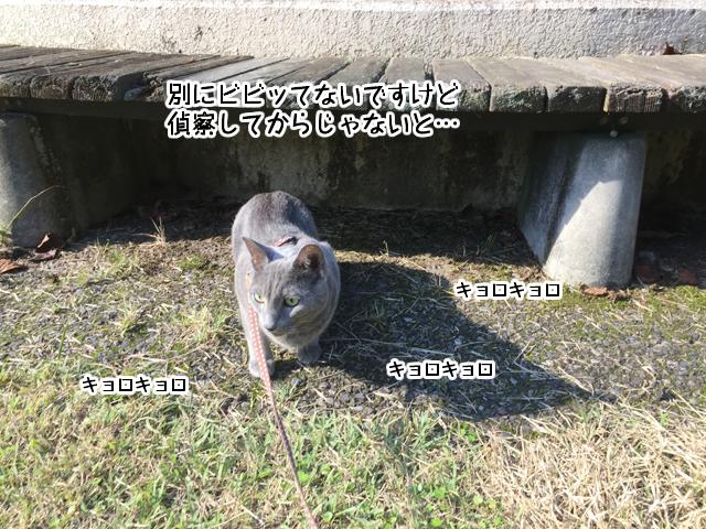 f:id:mama-mamico:20171010172312j:plain