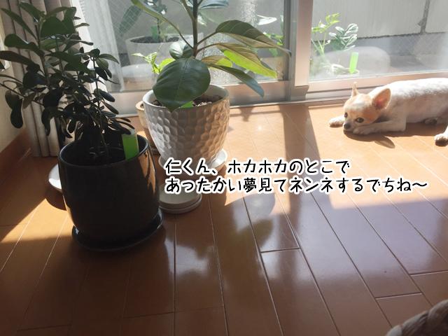 f:id:mama-mamico:20180705122020j:plain