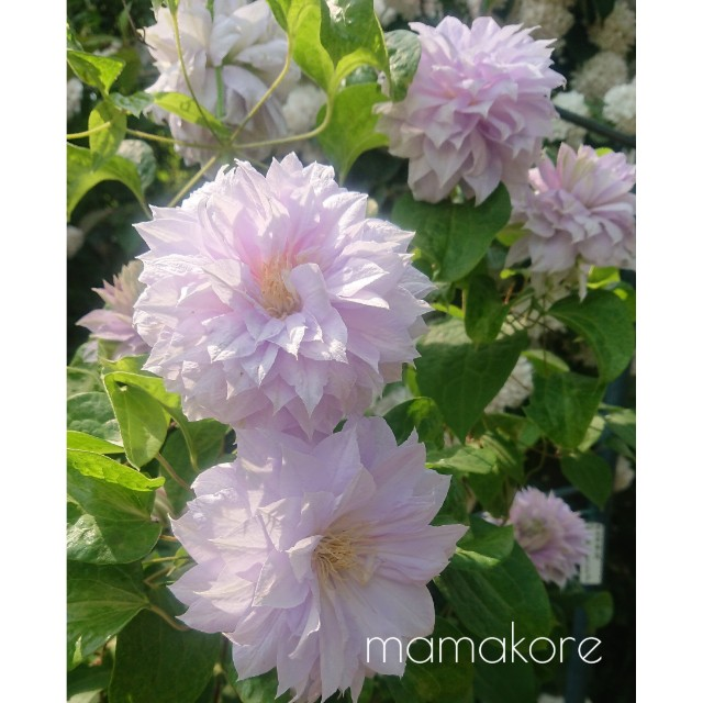 f:id:mamakore:20190530225312j:image