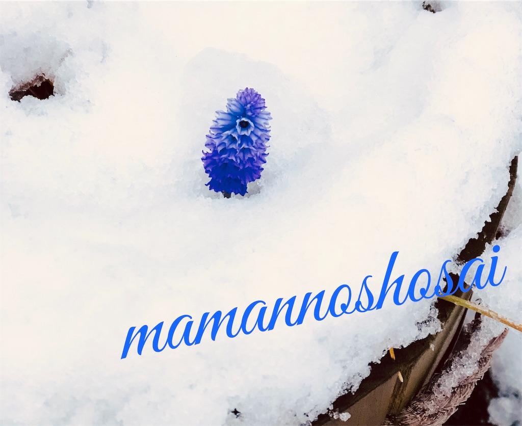f:id:mamannoshosai:20190411061230j:image