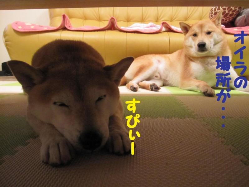f:id:mamekonbu0410:20110728143605j:image