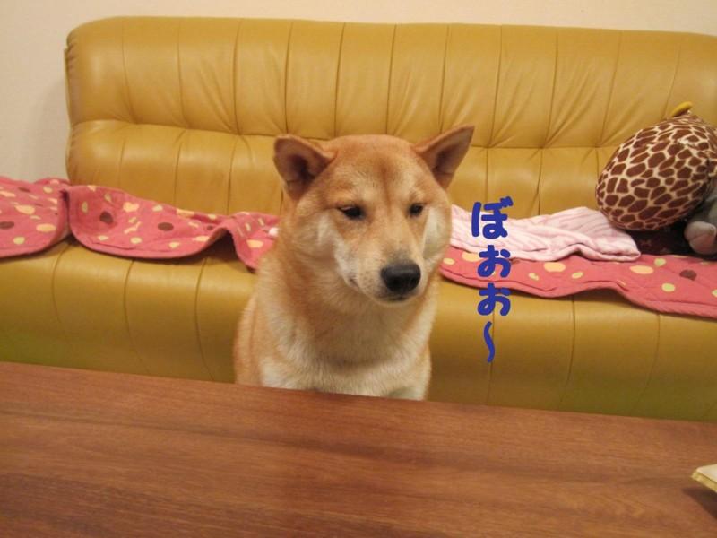 f:id:mamekonbu0410:20110728143610j:image