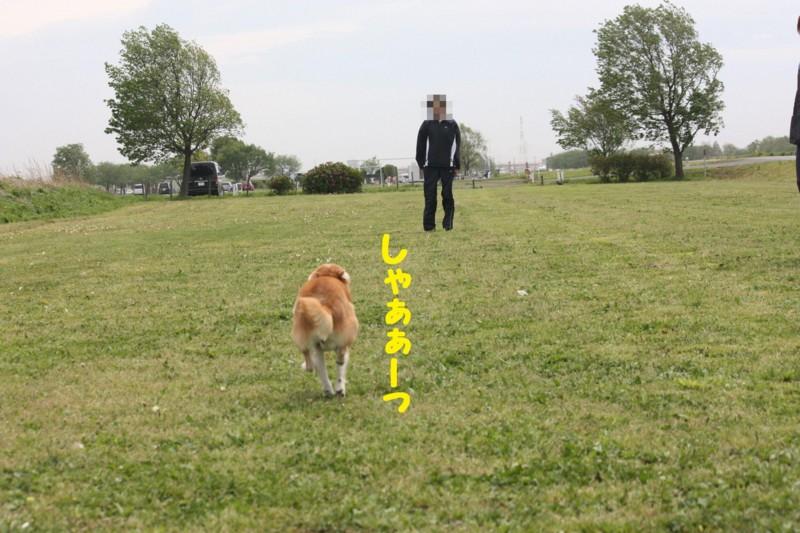 f:id:mamekonbu0410:20120102213855j:image
