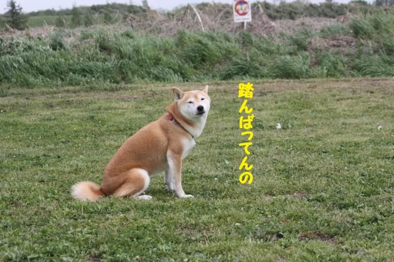 f:id:mamekonbu0410:20120102213859j:image