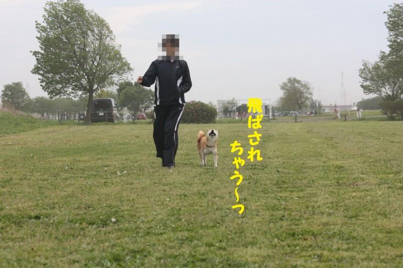 f:id:mamekonbu0410:20120102213903j:image