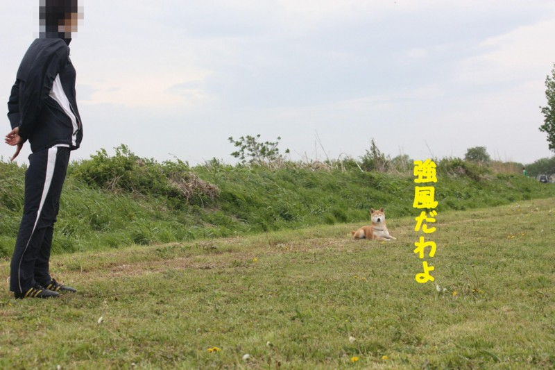 f:id:mamekonbu0410:20120102214100j:image