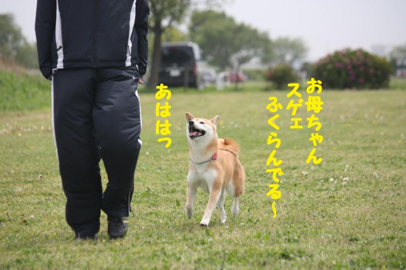 f:id:mamekonbu0410:20120102214104j:image