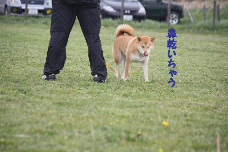 f:id:mamekonbu0410:20120102214314j:image
