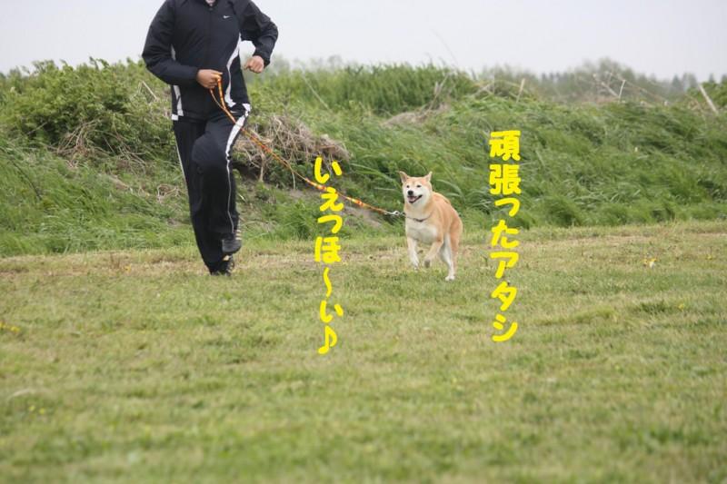 f:id:mamekonbu0410:20120102214321j:image