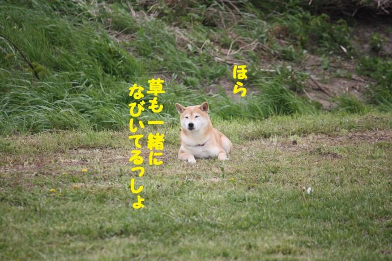 f:id:mamekonbu0410:20120102214325j:image