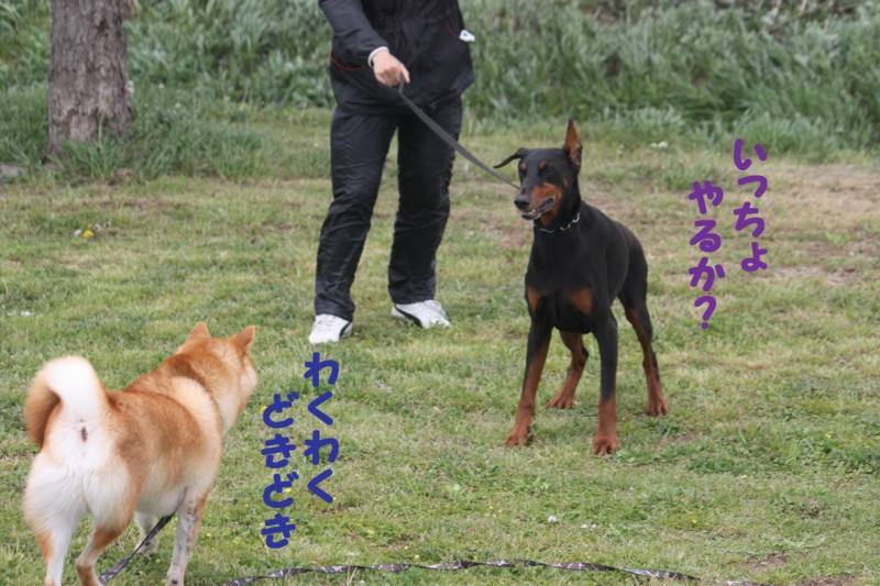 f:id:mamekonbu0410:20120102214520j:image