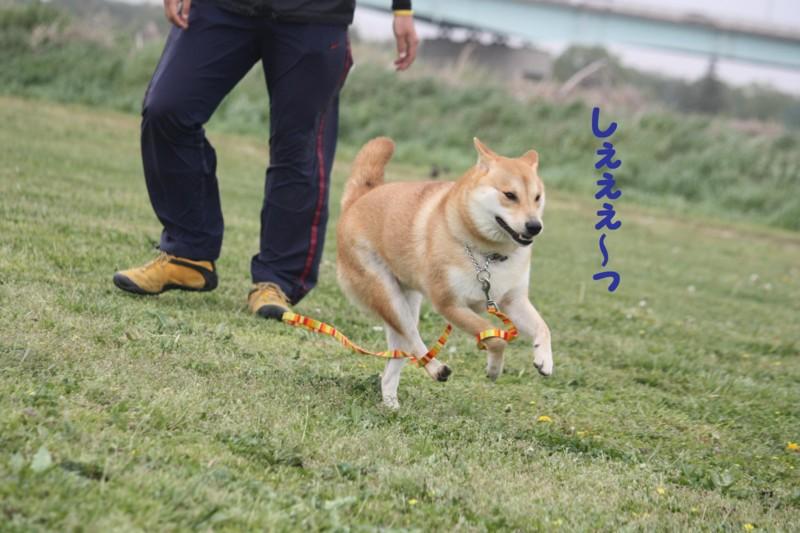 f:id:mamekonbu0410:20120102214540j:image