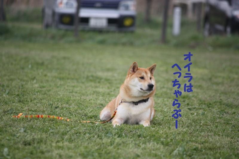 f:id:mamekonbu0410:20120102214544j:image