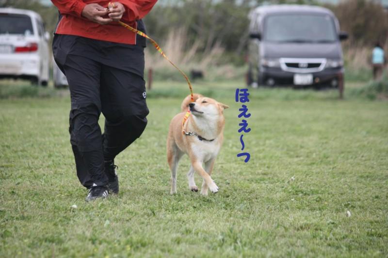 f:id:mamekonbu0410:20120102214548j:image