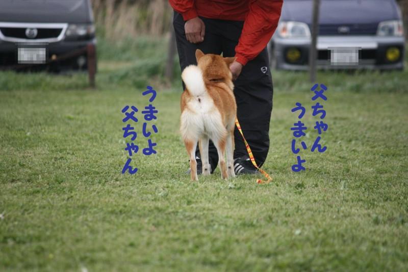 f:id:mamekonbu0410:20120102214552j:image