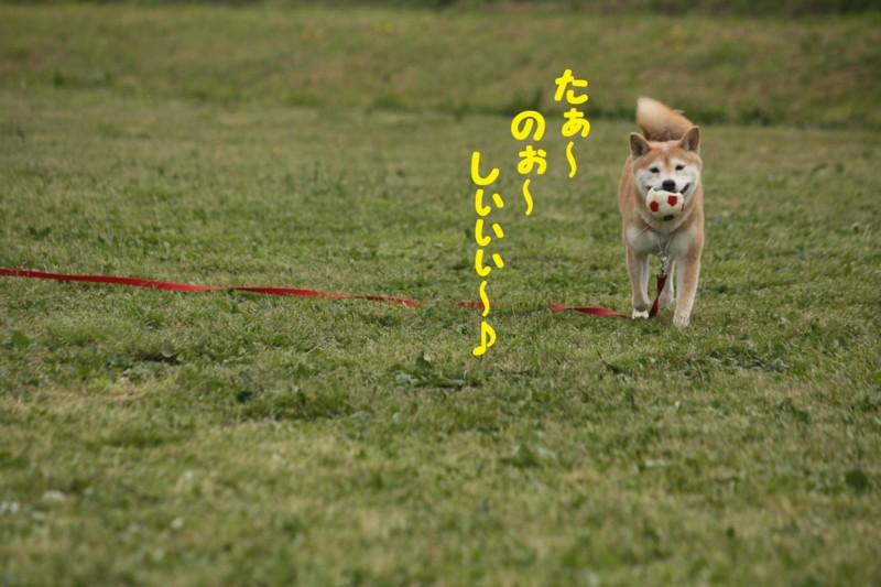 f:id:mamekonbu0410:20120102214800j:image
