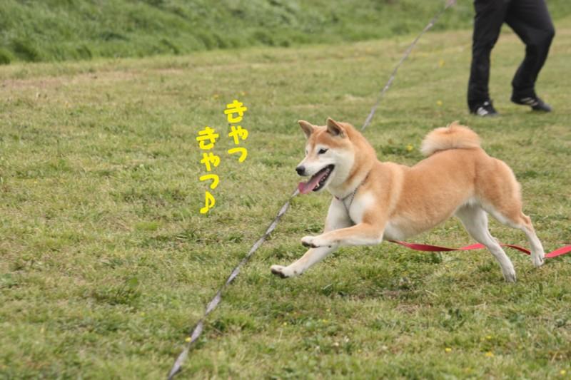 f:id:mamekonbu0410:20120102214804j:image