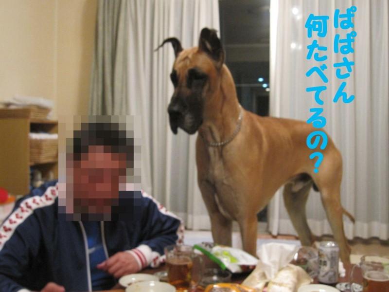 f:id:mamekonbu0410:20120102220650j:image