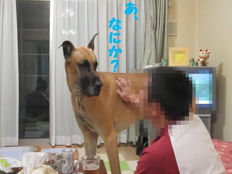 f:id:mamekonbu0410:20120102220654j:image