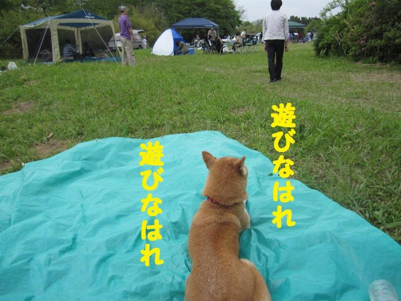 f:id:mamekonbu0410:20120102224623j:image