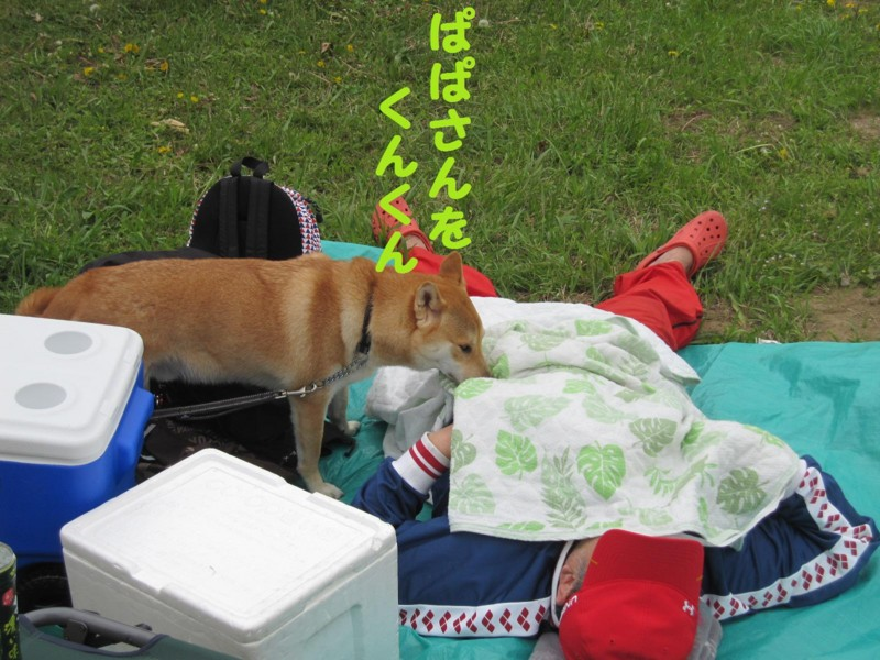 f:id:mamekonbu0410:20120102224646j:image