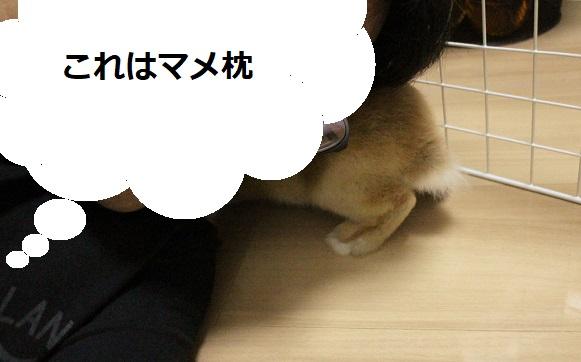 f:id:mamekousagi:20180329114256j:plain