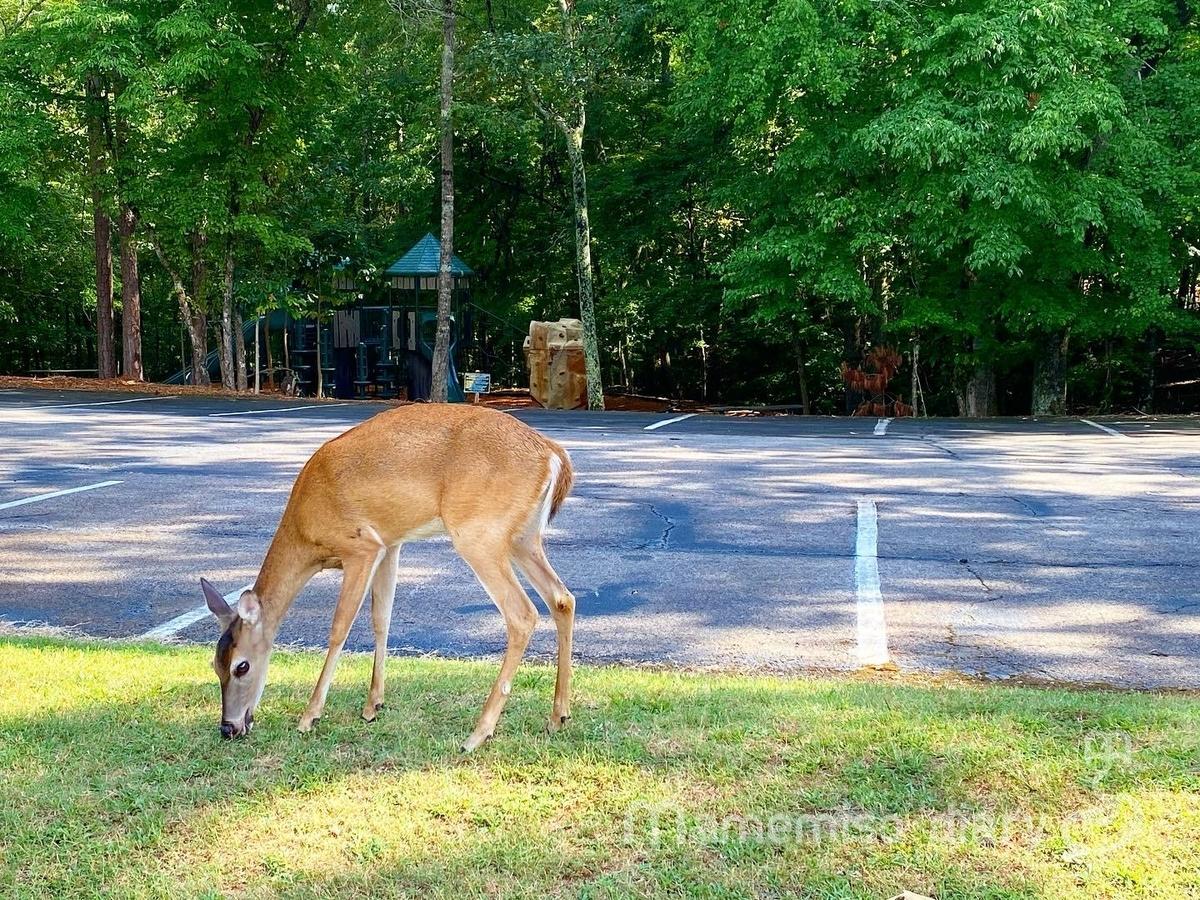 草を食べる鹿の様子