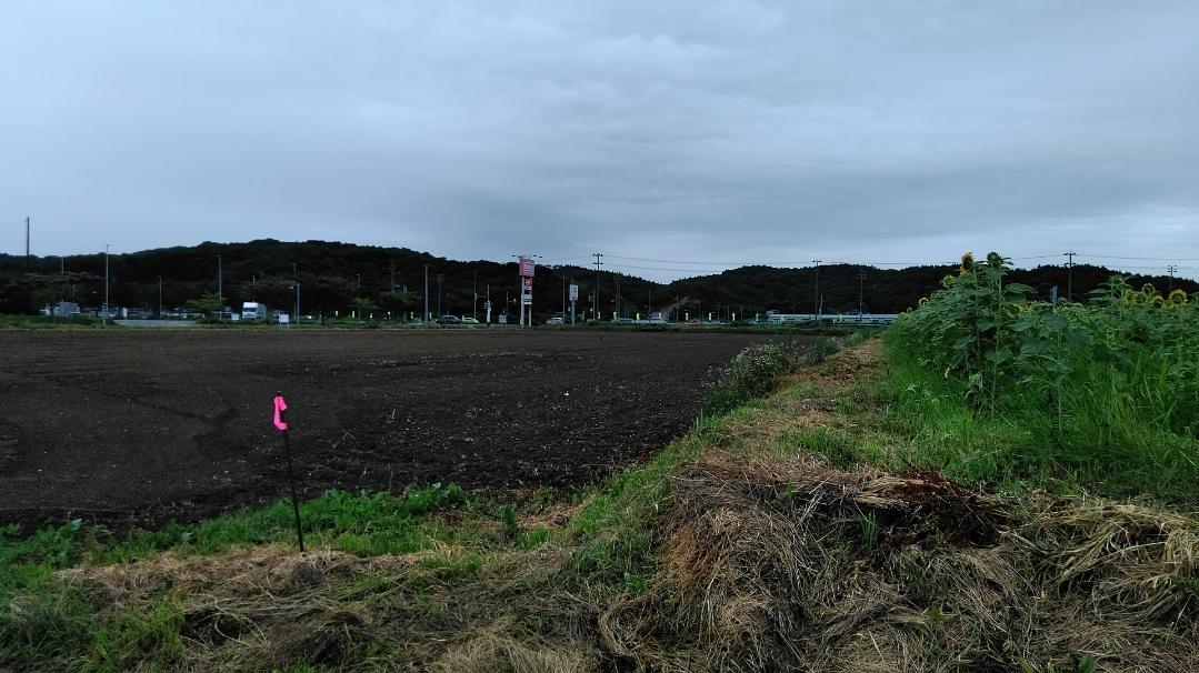 f:id:mamemuchi:20200920154636j:plain