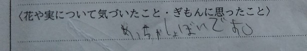 f:id:mamemuchi:20201004152043j:plain