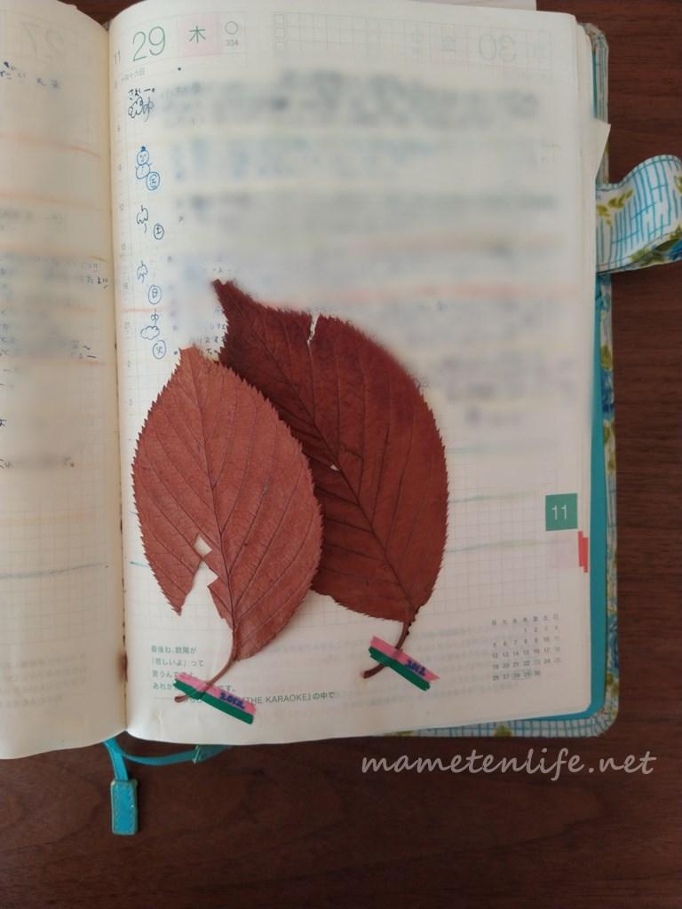 10年日記として使っているほぼ日手帳カズンに挟んである落ち葉