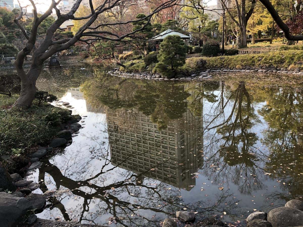 池には落ち葉がたくさん