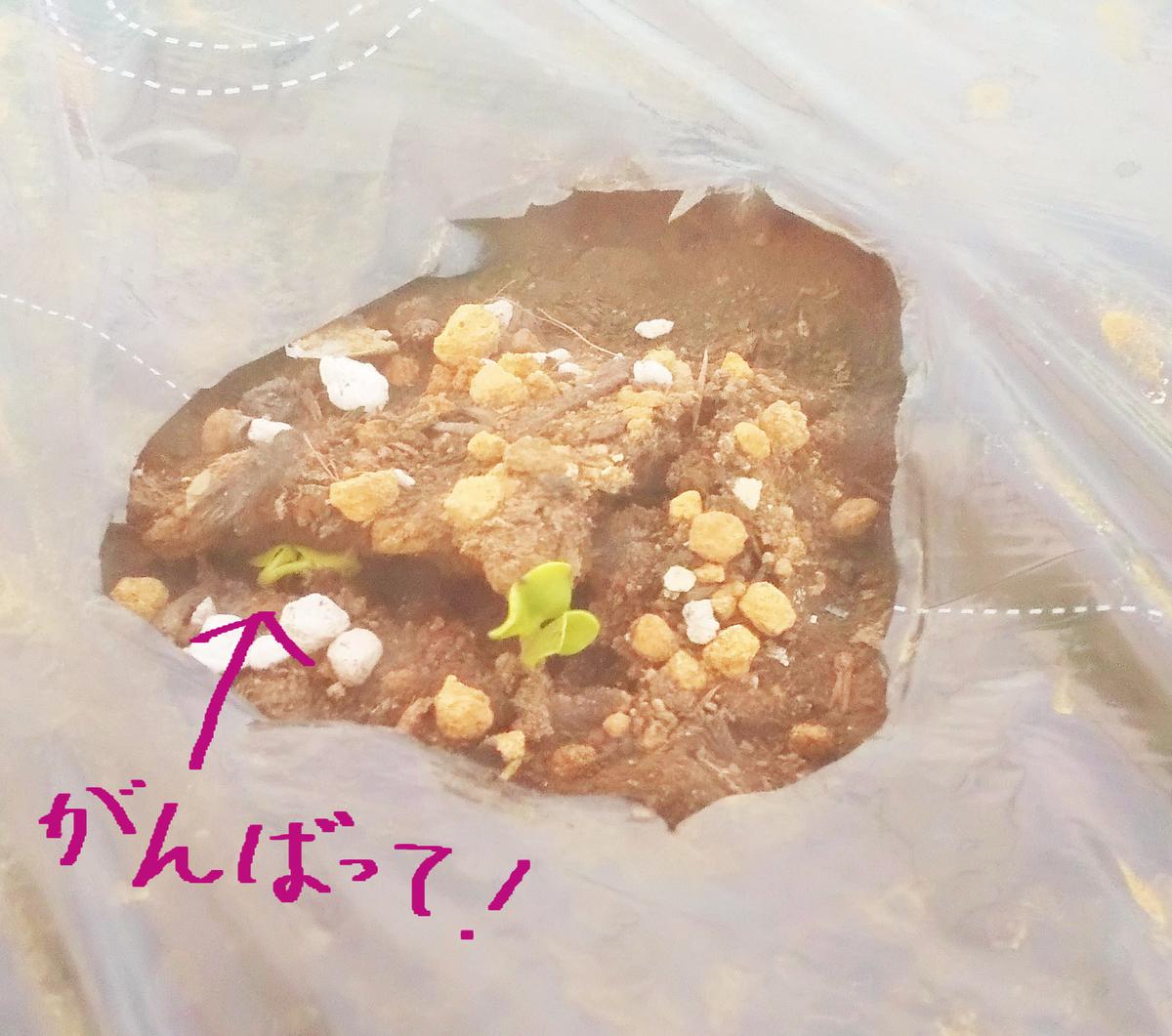 f:id:mamichan-yasai:20191005023046j:plain