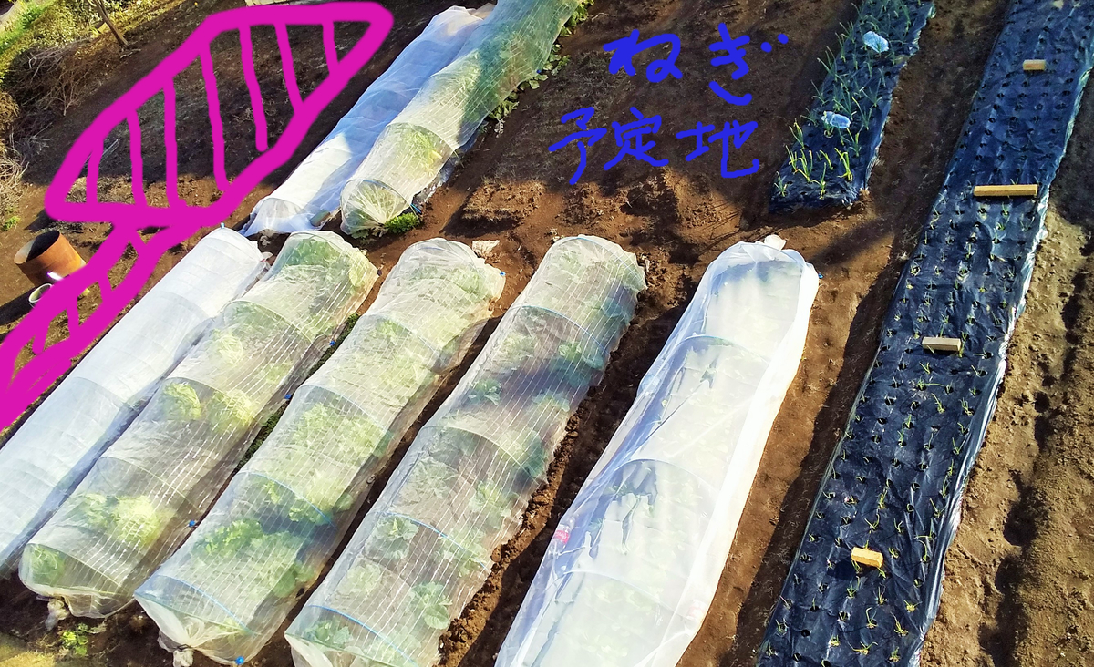 f:id:mamichan-yasai:20200215215711j:plain