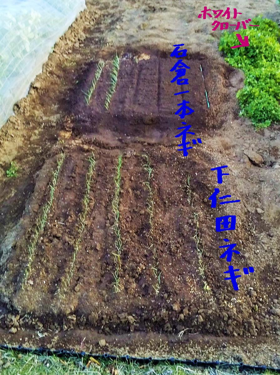 f:id:mamichan-yasai:20200326233655j:plain