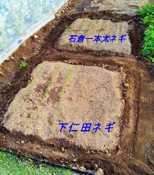 f:id:mamichan-yasai:20200404161818j:plain