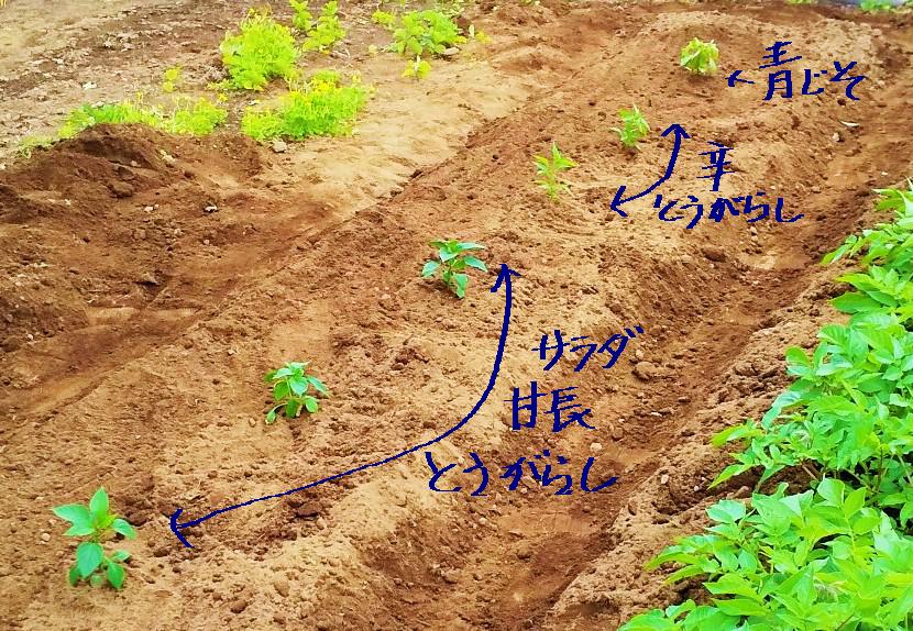 f:id:mamichan-yasai:20200509154704j:plain