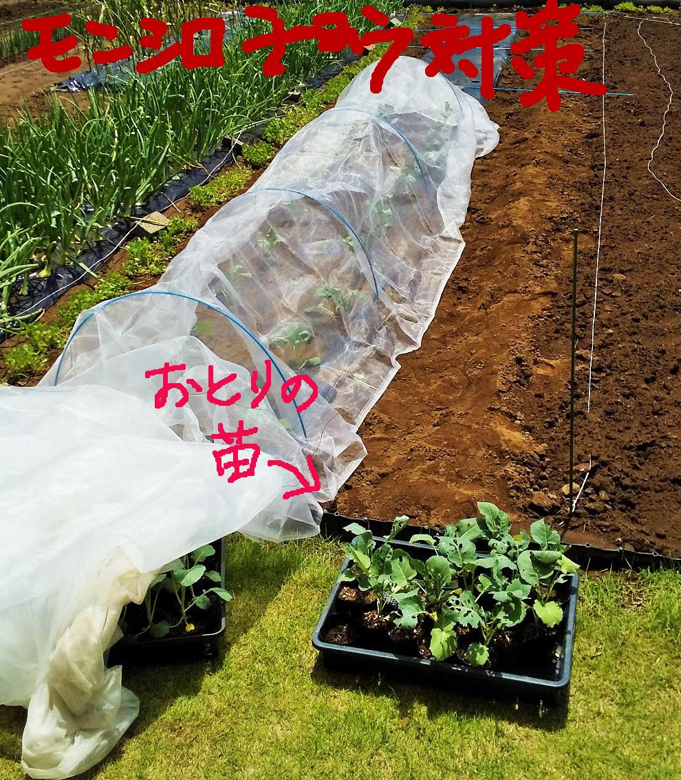 f:id:mamichan-yasai:20200518012715j:plain
