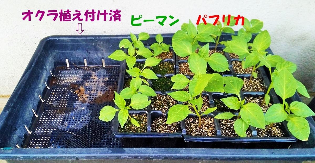 f:id:mamichan-yasai:20200720001815j:plain