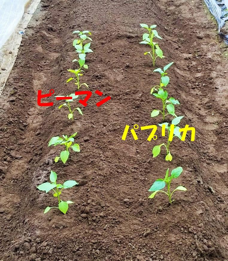 f:id:mamichan-yasai:20200720003926j:plain