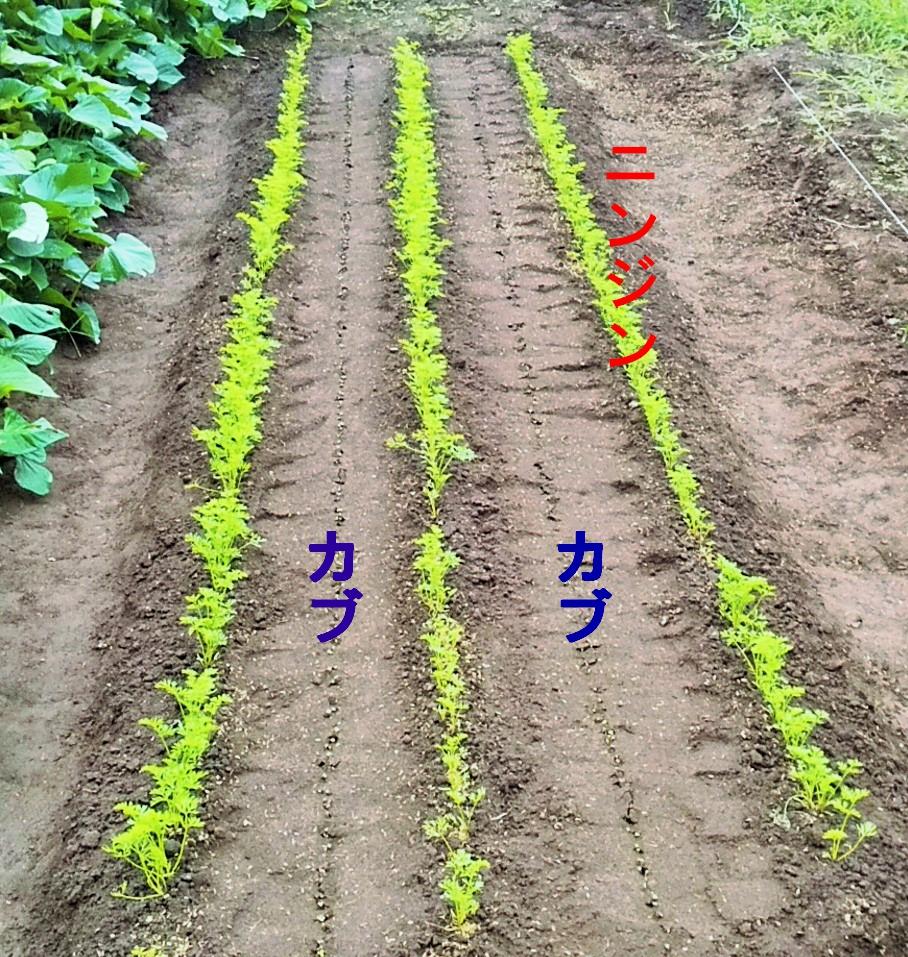 f:id:mamichan-yasai:20201002003340j:plain