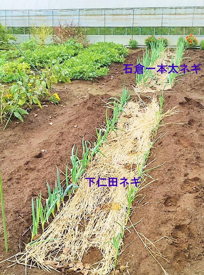 f:id:mamichan-yasai:20201023234530j:plain