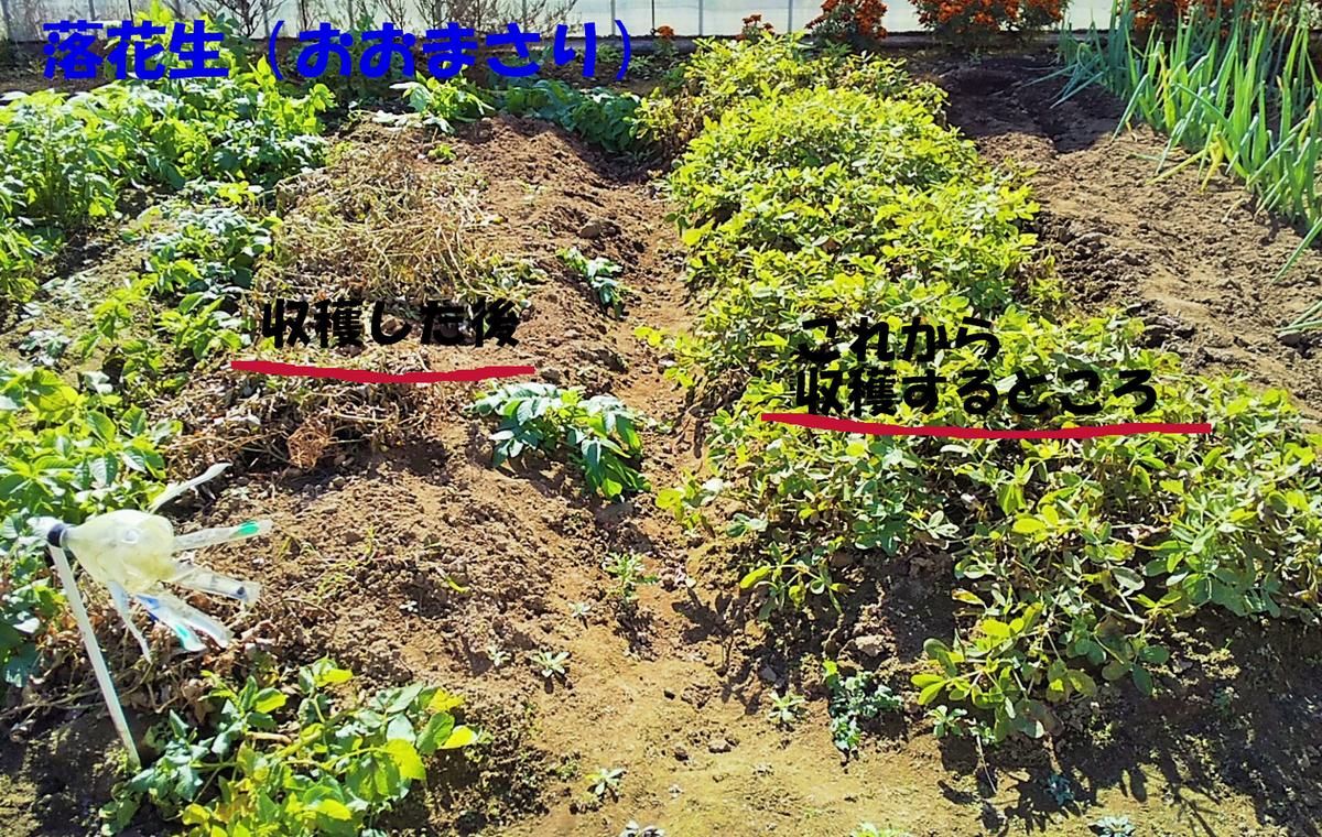 f:id:mamichan-yasai:20201227141121j:plain