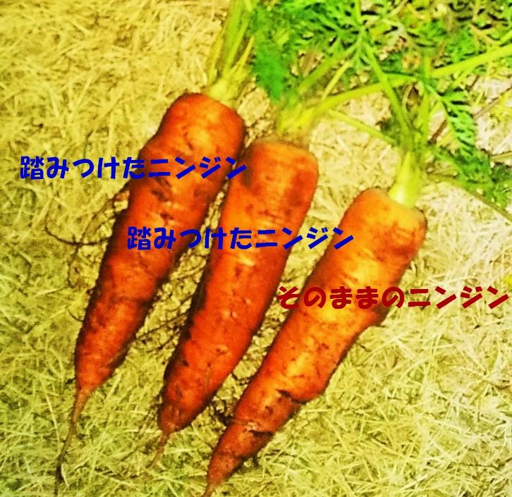f:id:mamichan-yasai:20210107182053j:plain