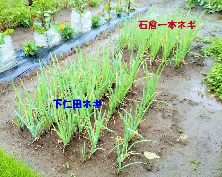f:id:mamichan-yasai:20210112235822j:plain