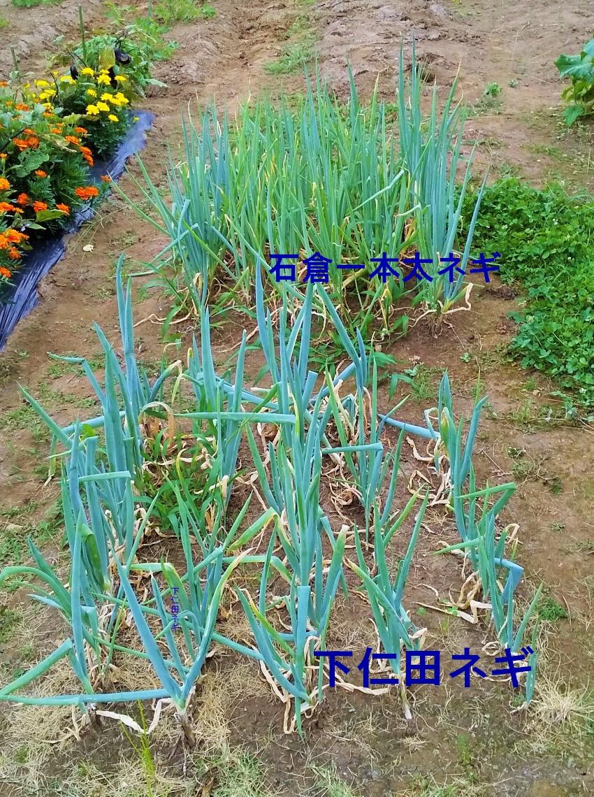 f:id:mamichan-yasai:20210113002740j:plain
