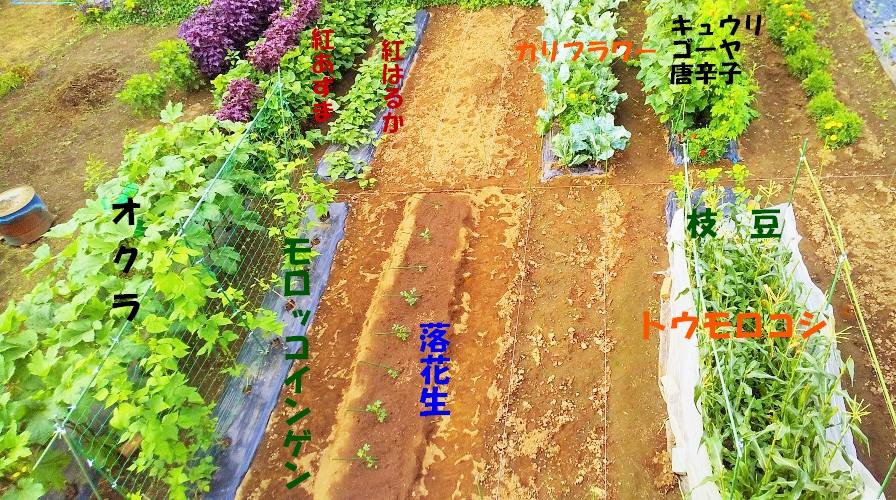 f:id:mamichan-yasai:20210719174103j:plain